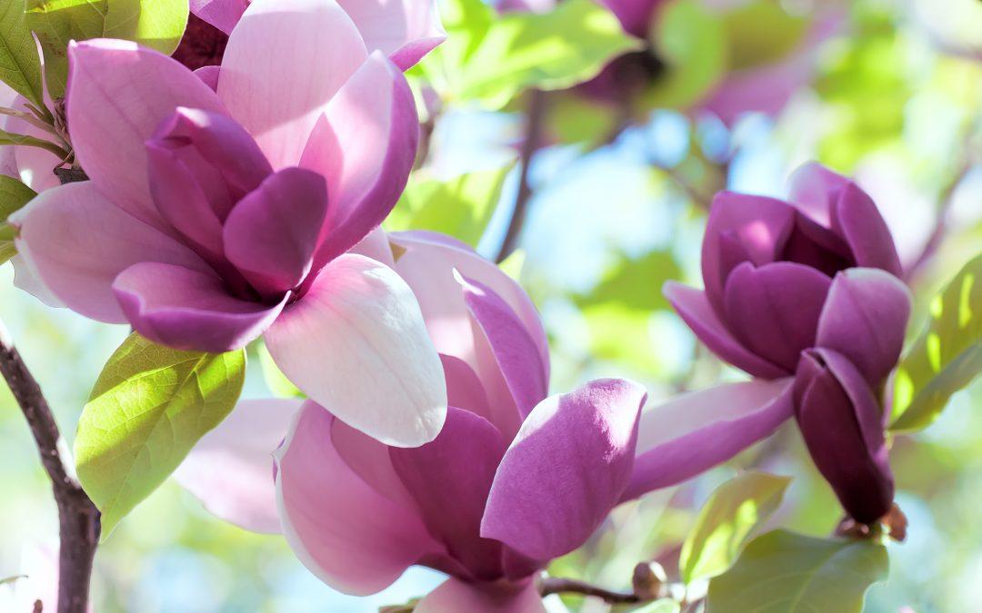 Ahora sí, ¡la primavera ya esta aquí!