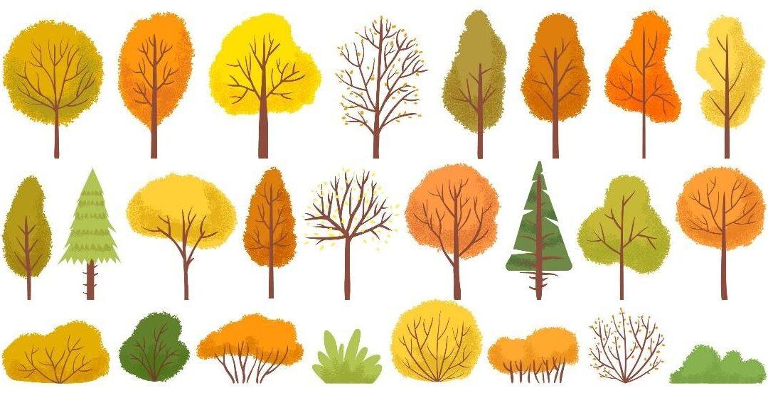 Impregna tu jardín de color también en otoño.